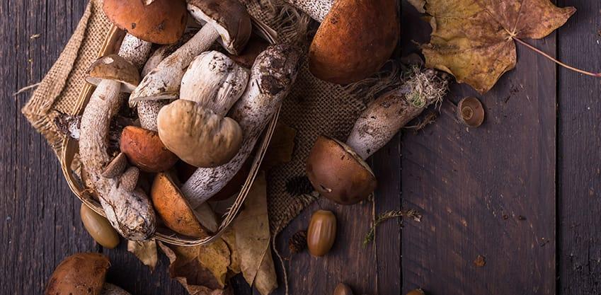 Finger food da aperitivo: è tempo di ricette con funghi