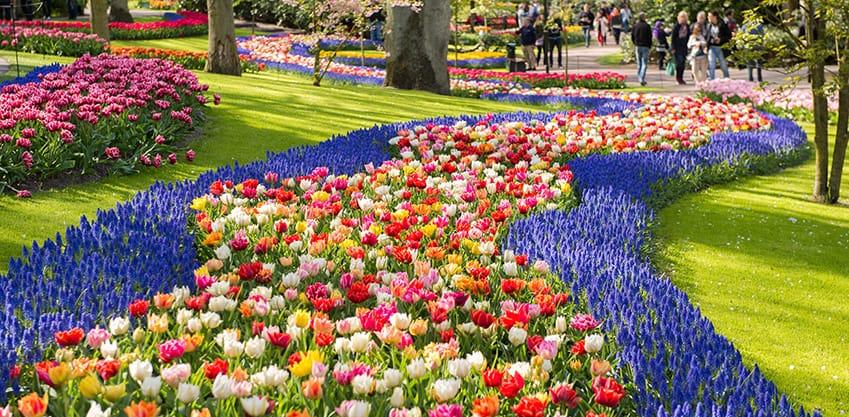 Vacanze di Pasqua 2019: il Tulp Festival di Amsterdam